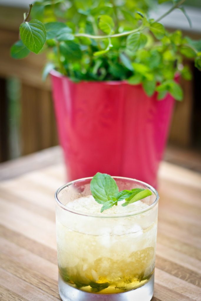 Chocolate Mint Julep in front of a potted chocolate mint herb plant (chocolate mint herb recipe)