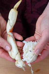 Break Crab Legs at Shoulder Joint - How to Split Dungeness Crab Legs without a Crab Cracker! (All you need is kitchen shears!)