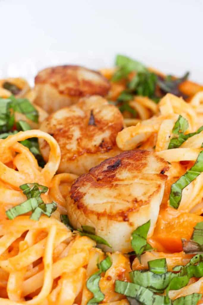 Close Up View of Pumpkin Fettuccine Alfredo with Scallops