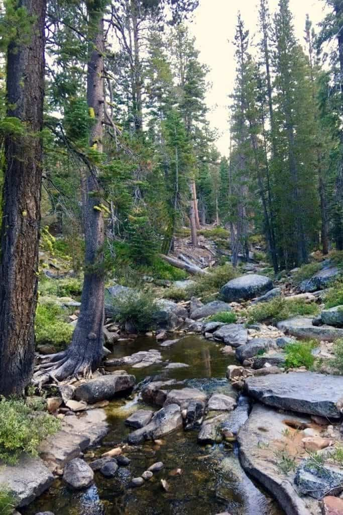 creek in a yosemite forest