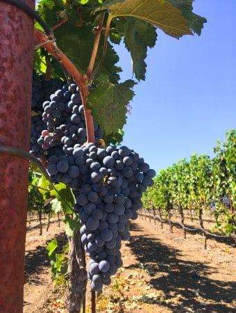 Alexander Valley Vineyards: Free Wine Tasting in Sonoma