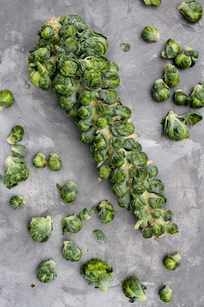 brussels sprouts on a stalk