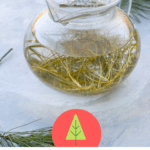 This is an easy foraging recipe for the nourishing and vitamin C-packed pine needle tea.