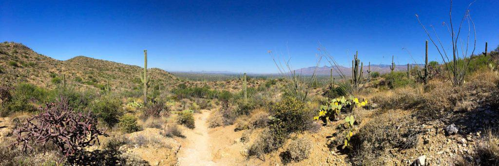 Hiking in Saguaro National Park