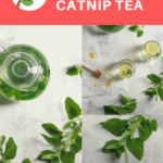 This quick and easy herbal catnip tea can be made with either fresh or dried catnip, and is a delicious way to use this fast-growing type of mint.