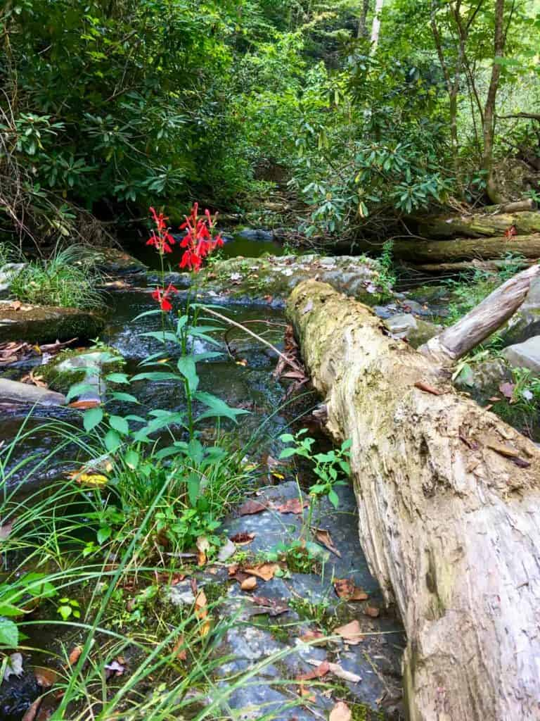 creek along the trail