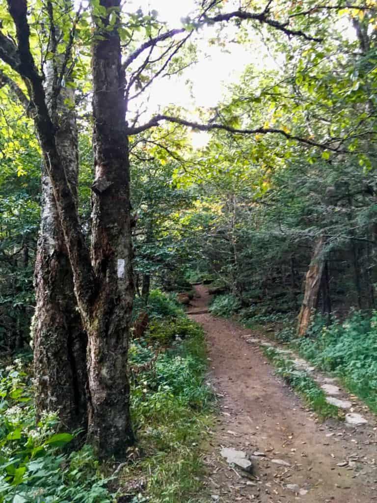 White Appalachian Trail Markers