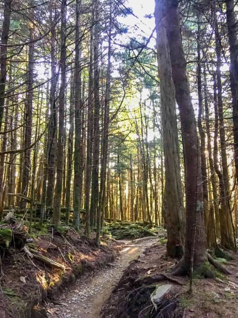 The trail to Charlie's Bunion (hiking in the Smokies)