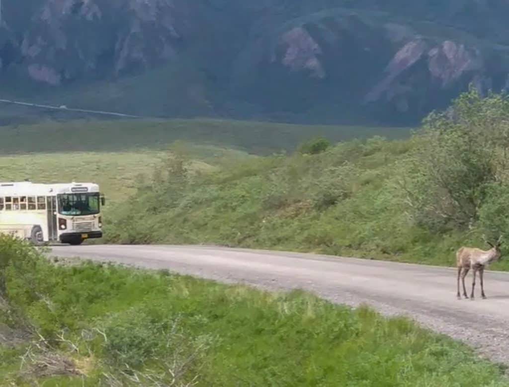 transit bus in denali national park