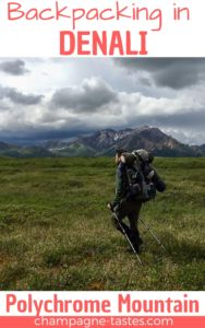 Are you planning to go backpacking in Denali National Park? We backpacked in Denali backcountry units 31 and 32. Here's how it went!