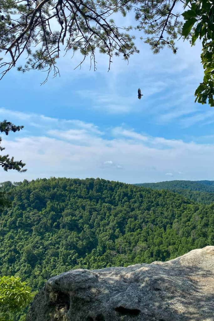 Turkey Vulture at Eagle's Nest Overlook