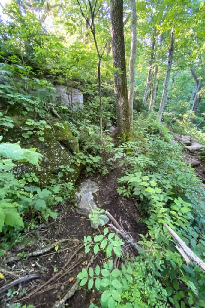 Primitive Green Trail