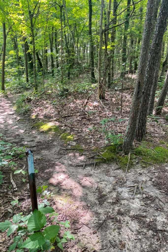 Unmarked Trail Junction for Devil's Kitchen