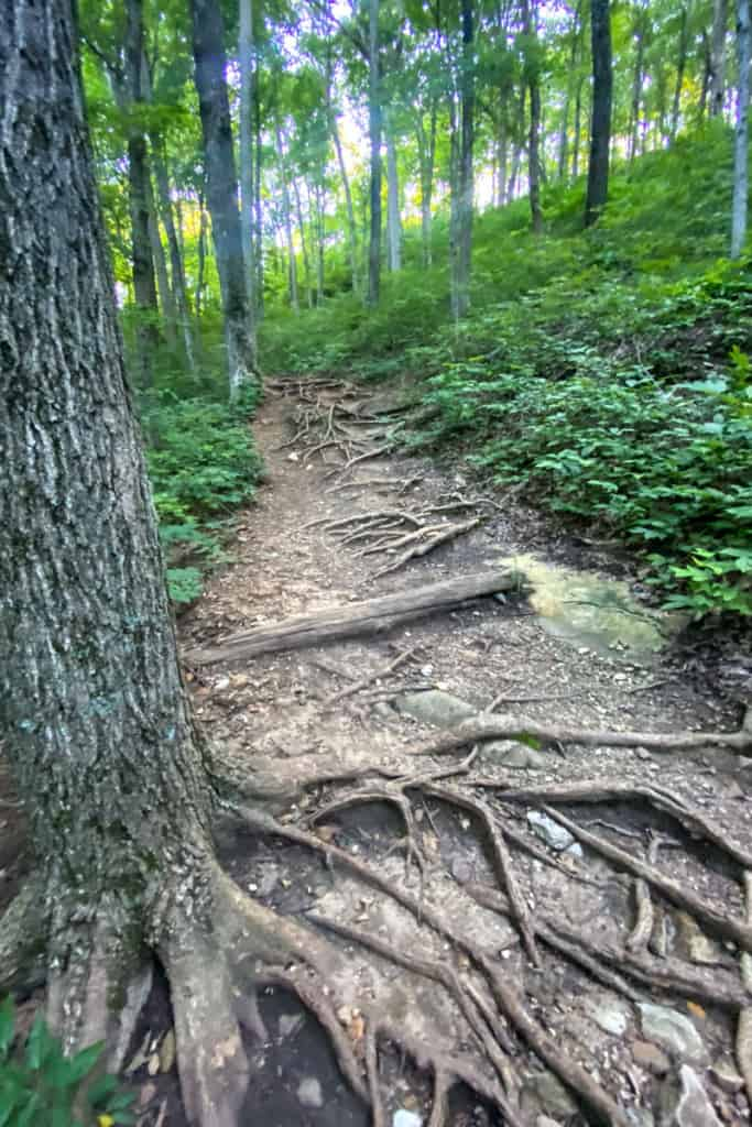 Trail to West Pinnacle Gets Steeper + Rougher