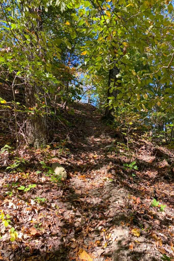 Yellow Trail Getting Steeper