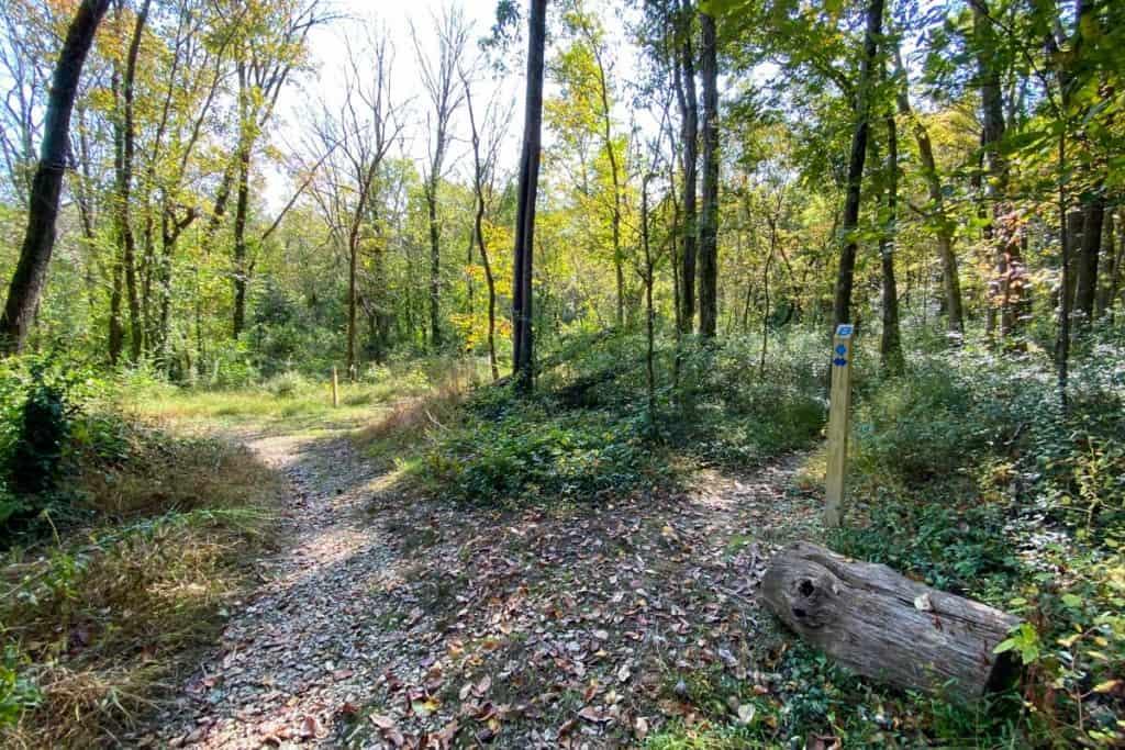 Blue Trail Marker + Unmarked Trail