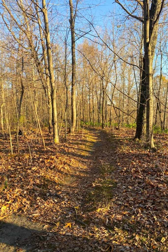 Trail to Buzzards' Roost
