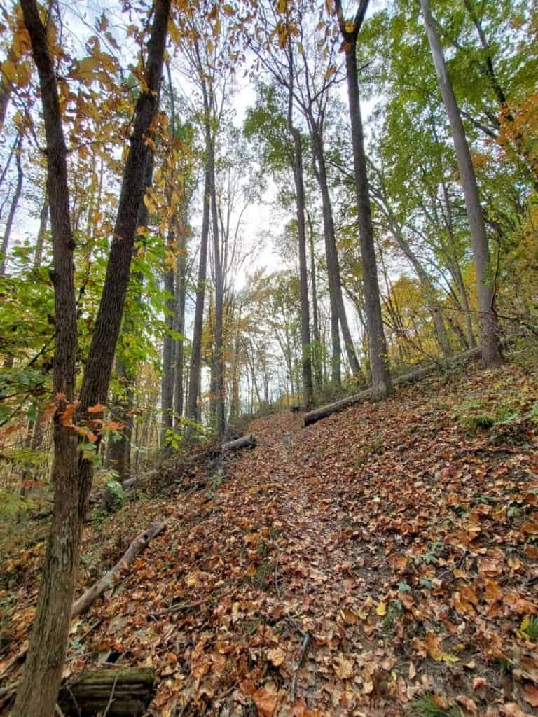 Views Along The Homestead Trail