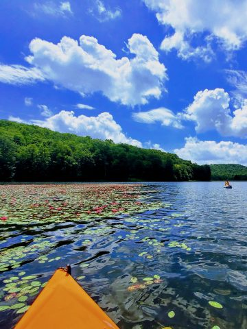 Lake and forest viewed from kayak