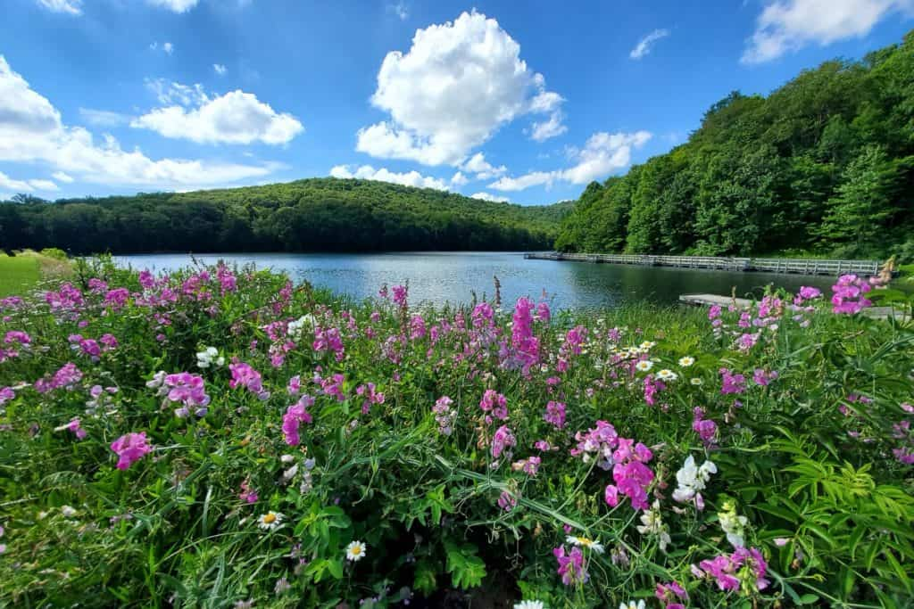 Wildflower, lake and hill landscape