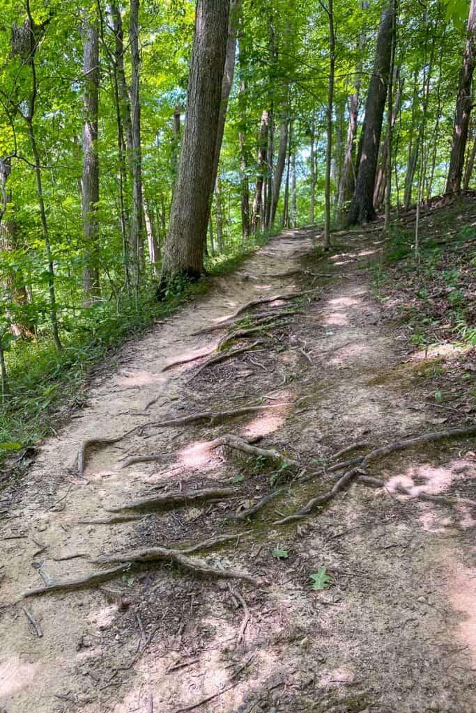 Mountain Biking Trails in East Fork Lake State Park