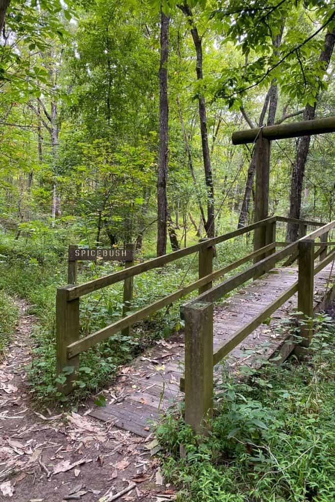 Bridge on Hiking Trail