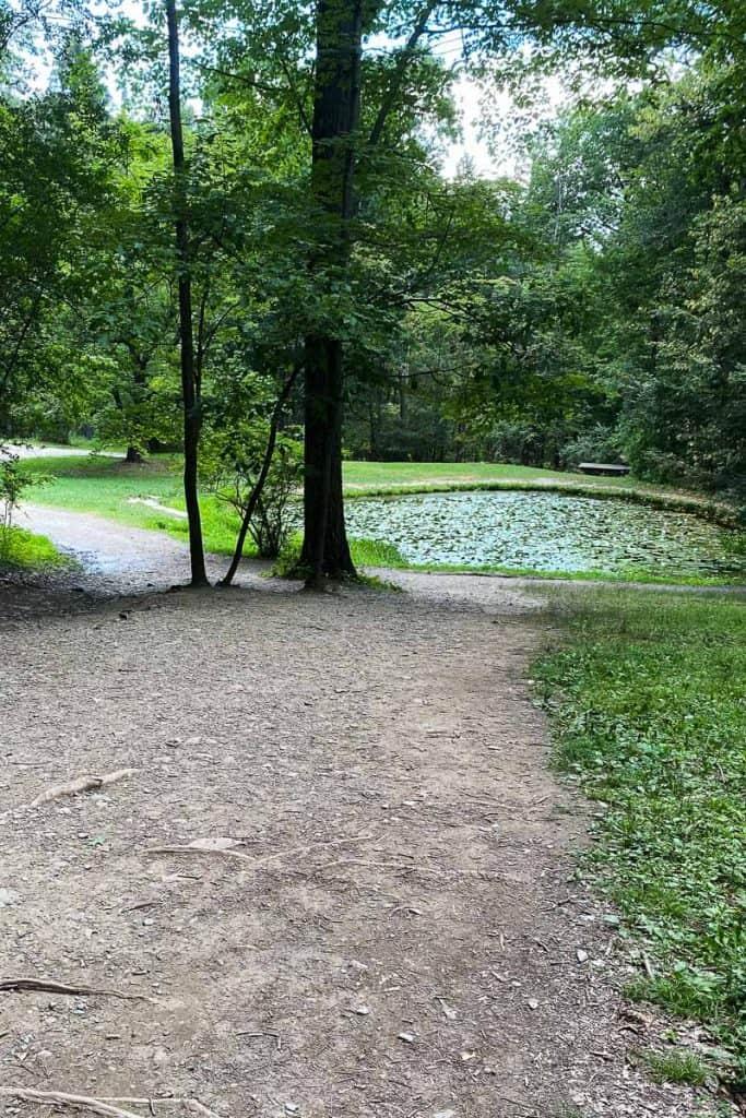 Lily pond at Watkins Glen State Park