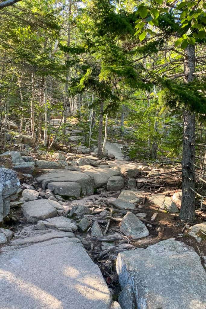 Rocky Path through a forest