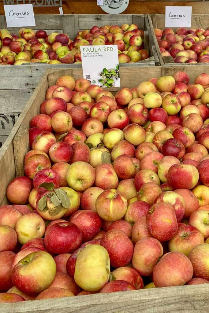 Orchard Apples for Sale.