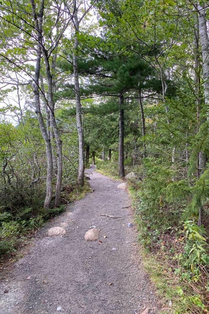 Easy, Flat Trail through woods