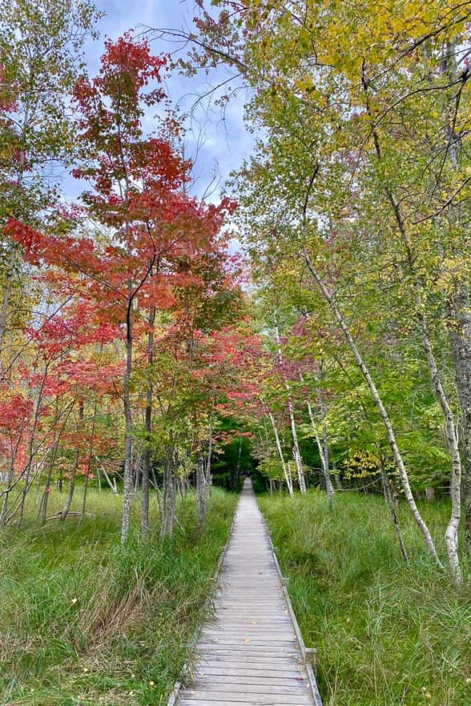 Leaves Changing along the Jessup Path.