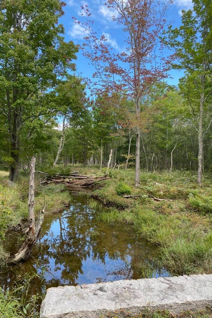 Plants + Trees in the Wild Gardens of Acadia Area.